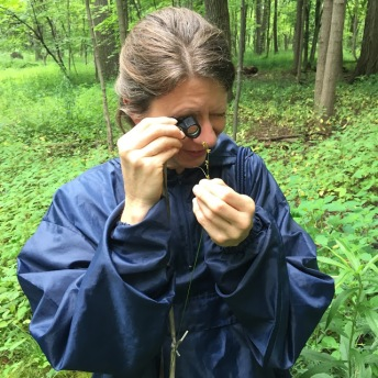 Lisa the sedge Inspector, Stephen Packard, July 2015