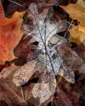 Leaf Collage, Tina Onderdonk